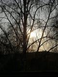 De lentezon van een Krottenwijkvenster stock foto