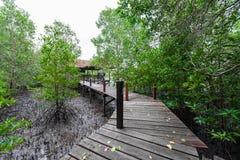 De Leren riem van de mangroven inTung Riek of Gouden Mangrovegebied bij Estuarium Stock Afbeelding