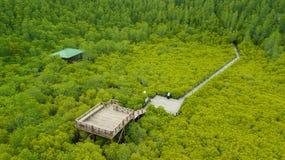 De Leren riem van de mangroven inTung Riek of Gouden Mangrovegebied bij Estuarium Royalty-vrije Stock Afbeeldingen