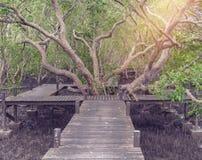 De Leren riem van de mangroven inTung Riek of Gouden Mangrovegebied bij Estuarium Stock Foto