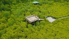 De Leren riem van de mangroven inTung Riek of Gouden Mangrovegebied bij Estuarium Royalty-vrije Stock Afbeelding