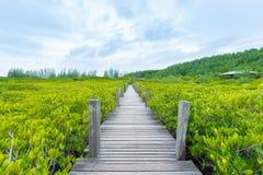 De Leren riem van de mangroven inTung Riek of Gouden Mangrovegebied bij Estuarium Stock Afbeeldingen