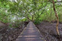 De Leren riem van de mangroven inTung Riek of Gouden Mangrovegebied bij Estuarium Royalty-vrije Stock Foto