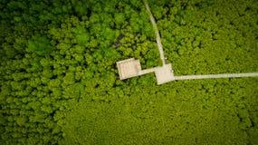 De Leren riem van de mangroven inTung Riek of Gouden Mangrovegebied bij Estuarium Royalty-vrije Stock Foto's