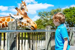 De lettende op en voedende giraf van weinig jong geitjejongen in dierentuin stock foto's