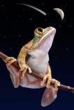 De lettende op vallend ster van de kikker Stock Afbeelding