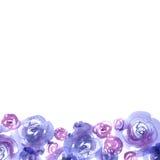 De leuke achtergrond van de waterverfbloem met blauwe rozen Stock Foto's