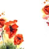 De leuke achtergrond van de waterverfbloem met rode papavers uitnodiging Stock Foto