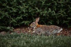 De leuke bont openluchtwildernis van Pasen van het konijnkonijntje Royalty-vrije Stock Afbeelding