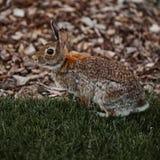 De leuke bont openluchtwildernis van Pasen van het konijnkonijntje Stock Fotografie