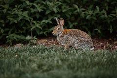 De leuke bont openluchtwildernis van Pasen van het konijnkonijntje Royalty-vrije Stock Foto
