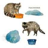 De leuke doeken van de wasbeer dierlijke was watercolor royalty-vrije stock foto's