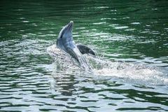 De leuke dolfijn stock afbeelding