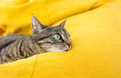De leuke gestreepte katkat met groene ogen ligt op geel kinderspel stock foto
