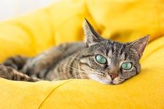 De leuke gestreepte katkat met groene ogen ligt op geel kinderspel royalty-vrije stock afbeeldingen
