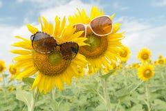 De leuke glazen van zonnebloemwaren Royalty-vrije Stock Foto