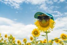 De leuke glazen van zonnebloemwaren Stock Foto's