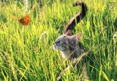 De leuke grappige kat op een de zomer zonnige tuin vangt een vliegende oranje vlinder in het duidelijke weer verbergen in het gro royalty-vrije stock fotografie