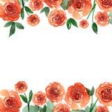 De leuke grens van de waterverfbloem Achtergrond met waterverf oranje rozen Royalty-vrije Stock Afbeeldingen