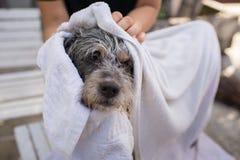 De leuke hond is in hondsalon Stock Foto