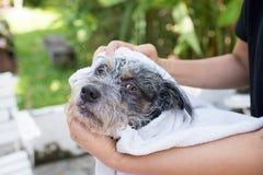 De leuke hond is in hondsalon Stock Fotografie