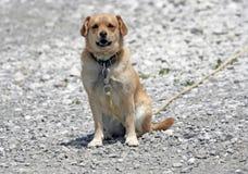 De leuke Hond van de Wacht Stock Afbeeldingen