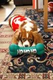 De leuke hond van het Kerstmispuppy Royalty-vrije Stock Afbeeldingen