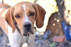 De leuke honden zijn vriendschappelijke en nuttige dieren aan mensen Royalty-vrije Stock Fotografie
