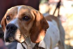 De leuke honden zijn vriendschappelijke en nuttige dieren aan mensen Stock Afbeeldingen