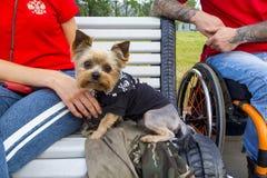 De leuke huisdierenhond zit op bank met gastheer in rolstoel Royalty-vrije Stock Afbeeldingen