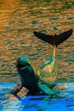 De leuke Irrawaddy-dolfijn (Orcaella-brevirostris) drijft in Th Stock Foto's