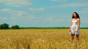 De leuke jonge donkerbruine vrouw met mooi lang haar in de witte korte zomer sundress loopt op gouden tarwegebied stock video