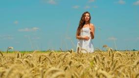 De leuke jonge donkerbruine vrouw met mooi lang haar in de witte korte zomer sundress loopt op gouden tarwegebied stock videobeelden