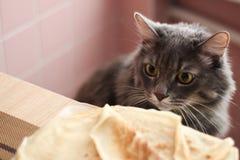 De leuke kat bekijkt pannekoeken stock foto