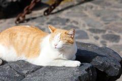 De leuke kat die met gesloten ogen zonnebaden en neemt een dutje lui op zwarte stenen van Lanzarote Eiland, Spanje stock foto's