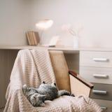 De leuke kat die van het huishuisdier op leunstoel thuis liggen Het leuke Schotse rechte grijze portret van de gestreepte katkat stock foto