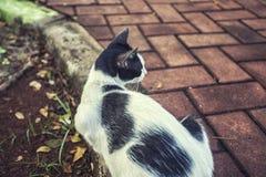 De leuke kat zit bij de tuin Royalty-vrije Stock Foto's