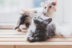 De leuke katten is grappig Royalty-vrije Stock Afbeeldingen