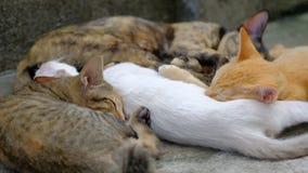De leuke katten slapen stock videobeelden