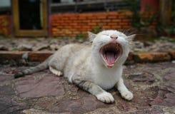 De leuke katten worden gegeeuwd Stock Foto's