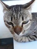 De leuke katten zijn zeer slaperig stock afbeeldingen