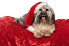 De leuke Kerstmishond met een Kerstmanhoed ligt op een rode deken Stock Foto