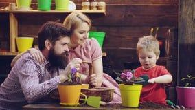 De leuke kindjongen helpt zijn ouders om voor installaties te geven De lenteconcept, aard en zorg De gelukkige bloemen van de fam stock footage