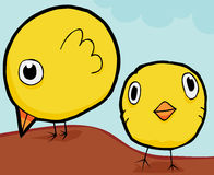 De leuke Kippen van de Baby Stock Foto