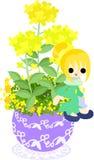 De leuke kleine bloempot - koolzaad Stock Afbeeldingen