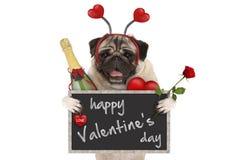 De leuke pug van de valentijnskaart` s dag hond met bord, champagnefles, hartendiadeem en nam toe royalty-vrije stock fotografie