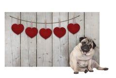 De leuke pug zitting van de puppyhond neer naast houten omheining van gebruikt steigerhout met rode harten royalty-vrije stock foto's