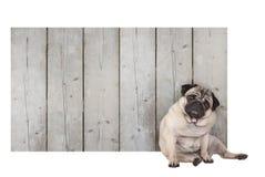 De leuke pug zitting van de puppyhond voor leeg houten omheinings promotieteken van steigerhout royalty-vrije stock fotografie