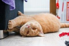 De leuke rode haired gestreepte katkater ligt op de vloer royalty-vrije stock foto