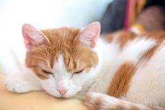 De leuke rust van de gemberpot op counch met geknepen ogen stock afbeelding